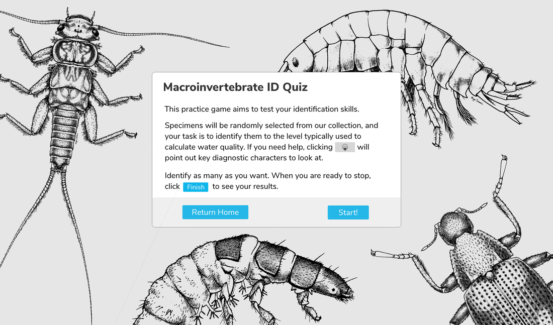 macroinvertebrates org - Project Blog - MACROINVERTEBRATES ORG